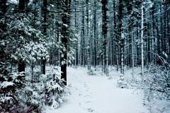 Sentier hivernal