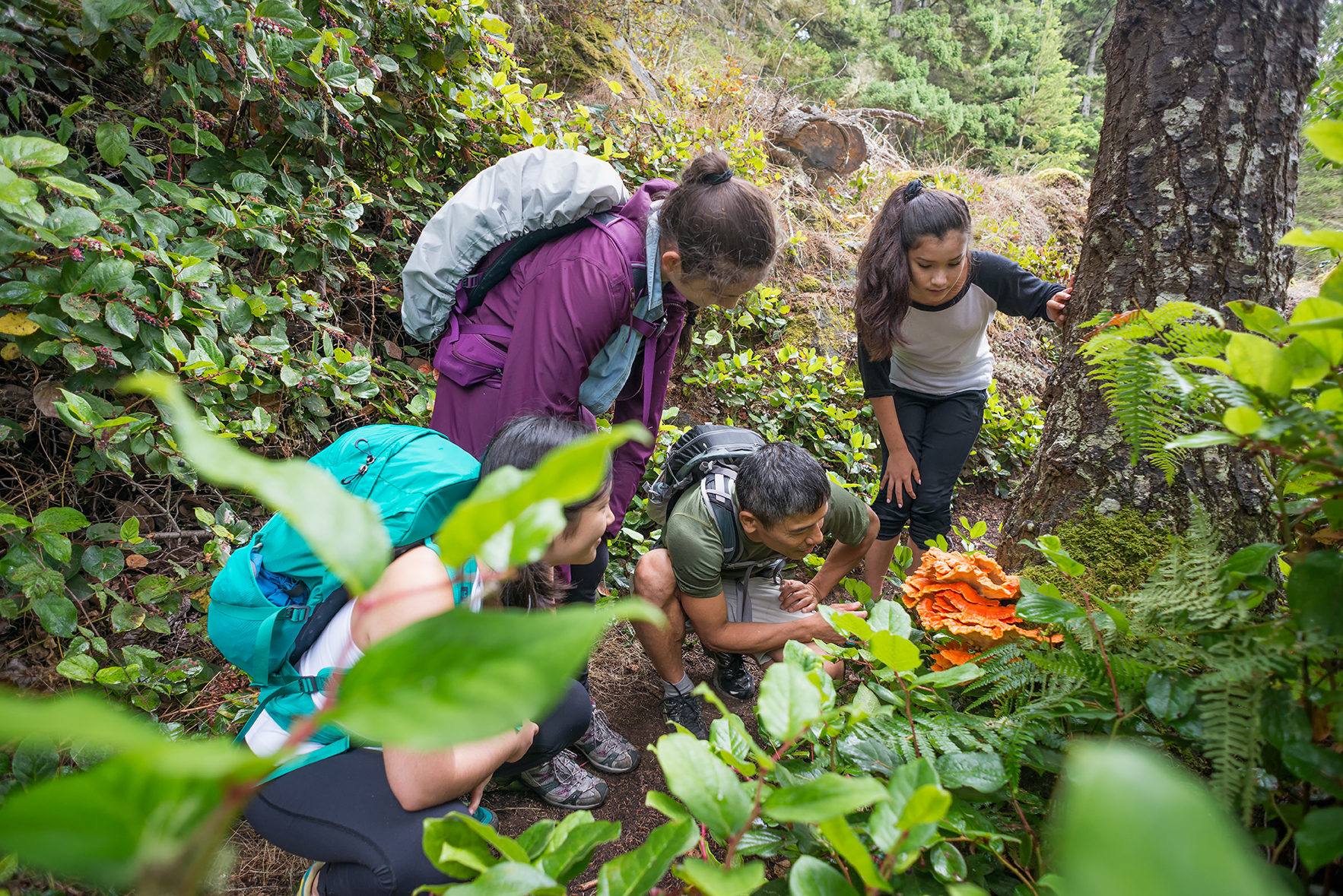 Backpackers Examine an Edible Orange Mushroom while Hiking Through Forest